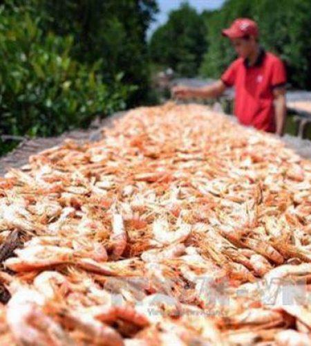 Small shrimp6
