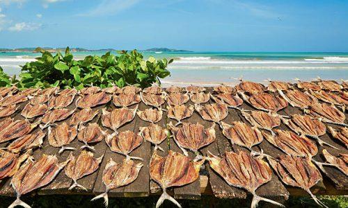 Dry fish on wooden desk, Sri Lanka